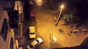 tbilisi floods crocodile