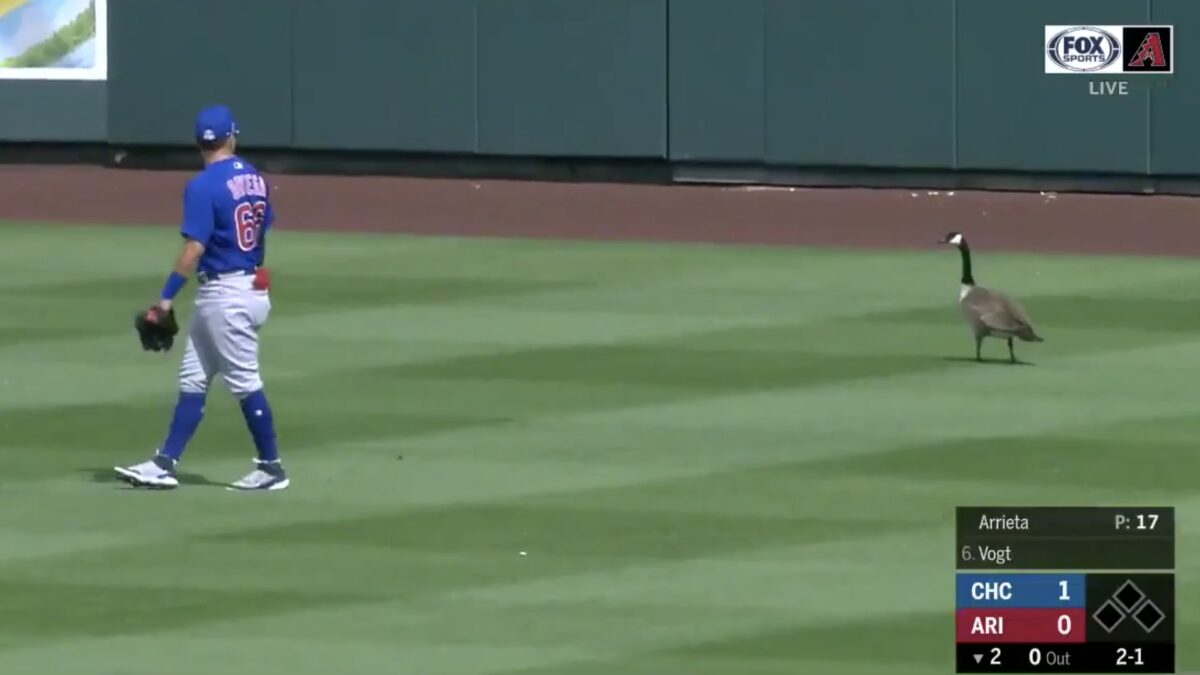 WATCH: Aggressive Goose Takes Over Outfield During Spring Training Game