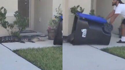 Florida Man Traps Gator in Trash