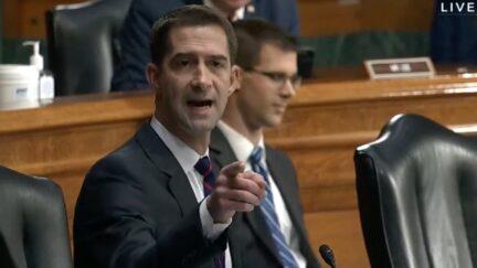 Sen. Tom Cotton (R-AR) slams AG Merrick Garland during Senate Judiciary hearing on Oct. 27